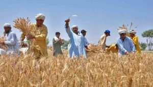 Read more about the article Protecting Pakistan's agriculture sector