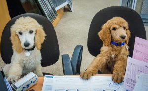Read more about the article How Office Dogs Can Be Catalysts Of Creativity